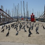 Pigeons flocking to free food on the pier